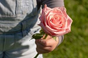 rose-3415370_960_720