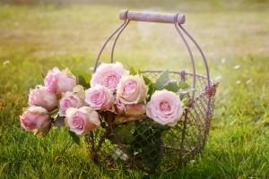 roses-1566792